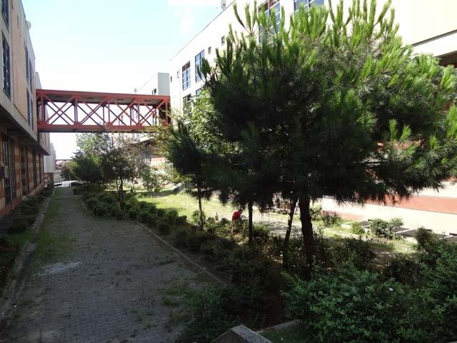 Tekstilkent'in Bahar Çicekleri